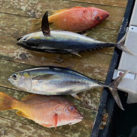 Grilled Snapper and Tuna Sashimi